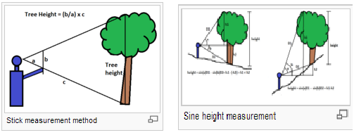Measurement of tree height from ground
