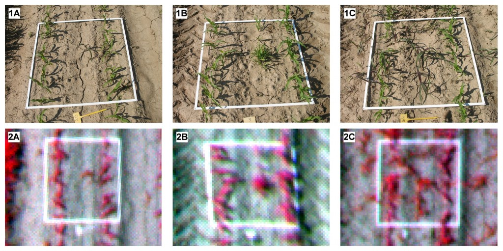 On-ground photographs (1) and UAV images (2) of the 1x1-m frames used in the ground-truth sampling of three different categories of weed coverage: a) low, b) moderate, and c) high.