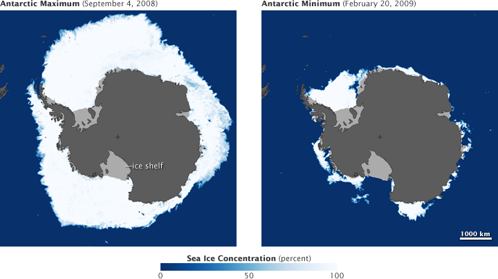Antarctic sea ice peaks in September, and reaches a minimum in February. In some places, sea ice melts completely in the summer. (NASA maps by Jesse Allen, based on AMSR-E data from the National Snow and Ice Data Center.)