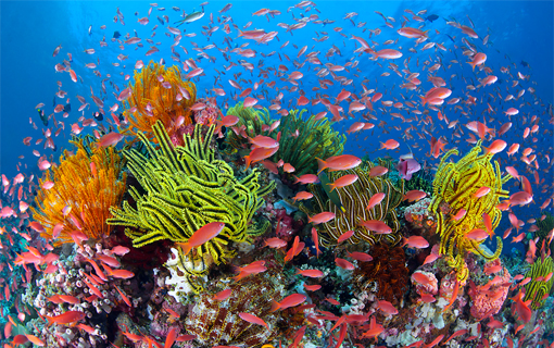 The pro-active conservations through specific intervention should be done to protect coral reefs