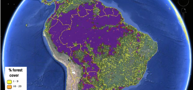 More Accurate View of Global Forest Map from IIASA