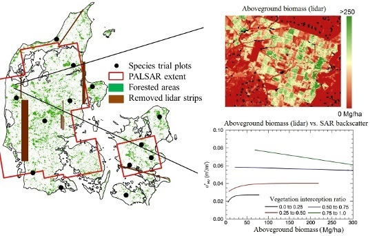 SAR Backscatter Related to Forest Cover
