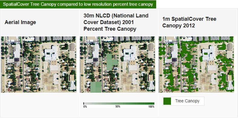 SpatialCover Tree Canopy