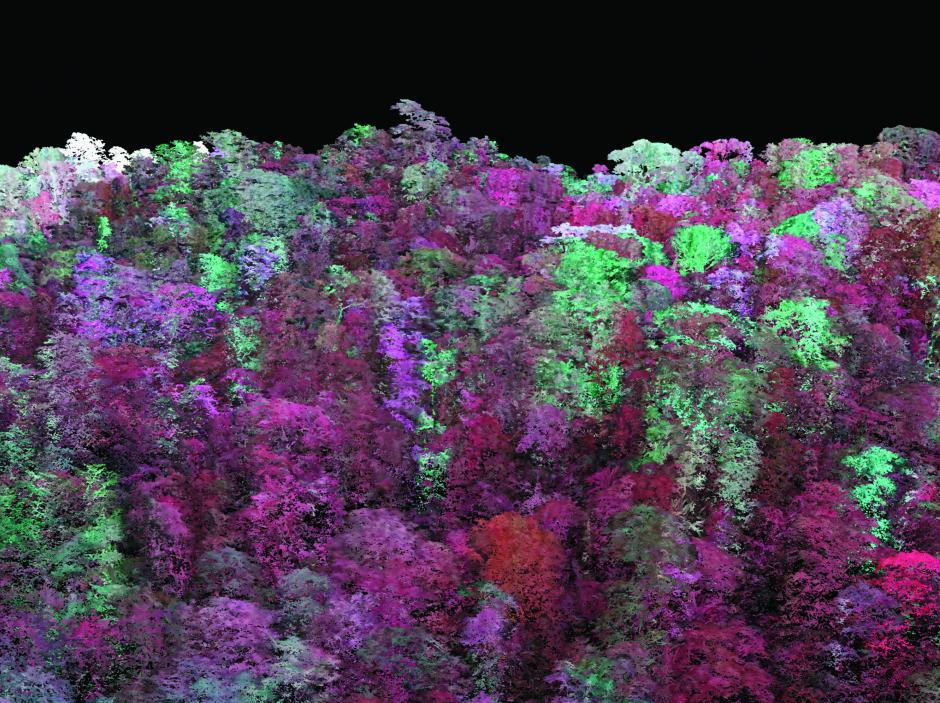 carbon-mapping-forest-canopy