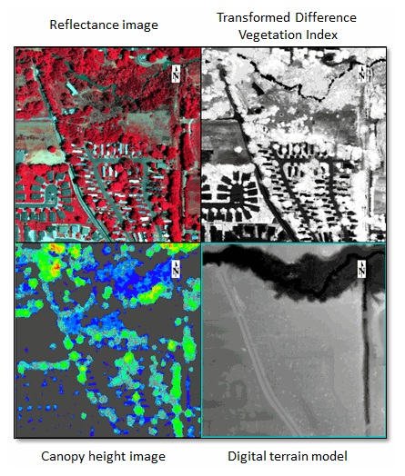 Multi-view display in ENVI showing hyperspectral- and LiDAR-derived products