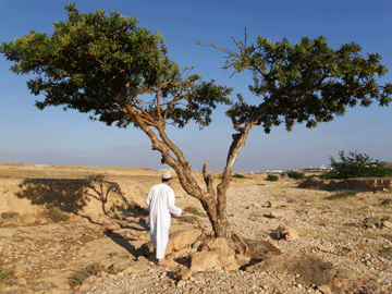 Remote Sensing Technology To Protect Frankincense Trees Gis
