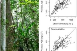 Modeling Aboveground Biomass in Dense Tropical Submontane Rainforest Using Airborne Laser Scanner Data