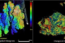 Mapping Forest Structure From Space