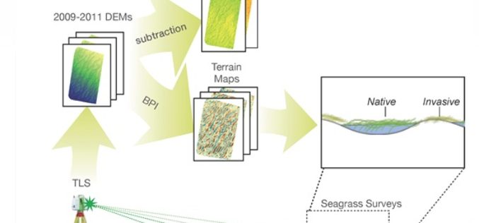 Terrestrial Laser Scanning Reveals Seagrass Microhabitat Structure on a Tideflat
