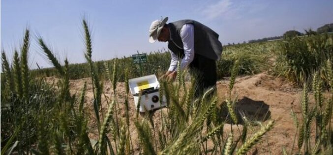 India Turns to 'Satellite God' for Crop Monitoring