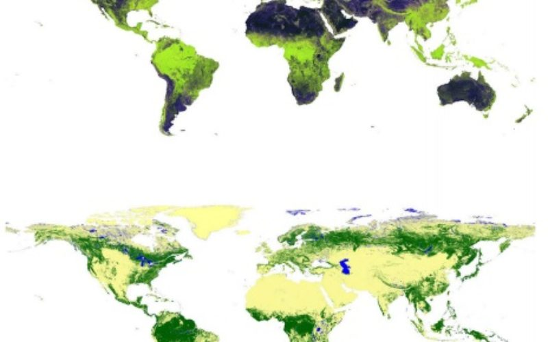 Global Forest Watch Using High Resolution Synthetic Aperture Radar