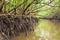 Mumbai Goes for Mangrove Mapping and Monitoring