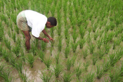 Indian Government Unveils Kisan Project; Hailstorm App to Assess Crop Damage