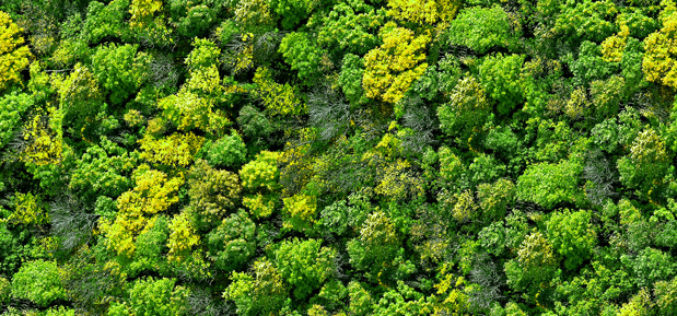 Preserve & Conserve Forests for Human Wellbeing