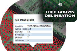 Tree Crown Delineation a New App to Monitor Trees