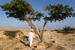 Remote Sensing Technology to Protect Frankincense Trees