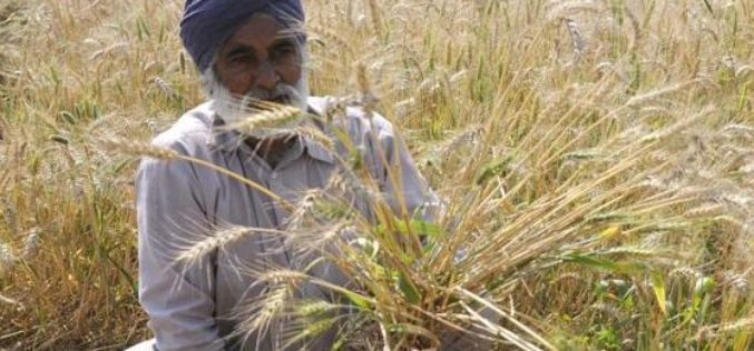 Punjab to Launch Mobile App for Farmers to Manage Crop Residue