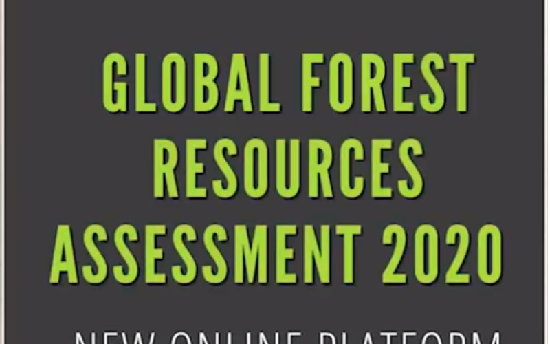 FAO Launched New Tools for Reporting on World's Forest Resources